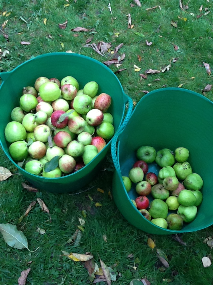 Apple Pressing for our Harvest Day