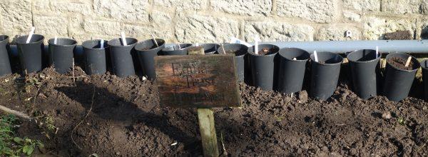 Edina Trust – Bulb Planting