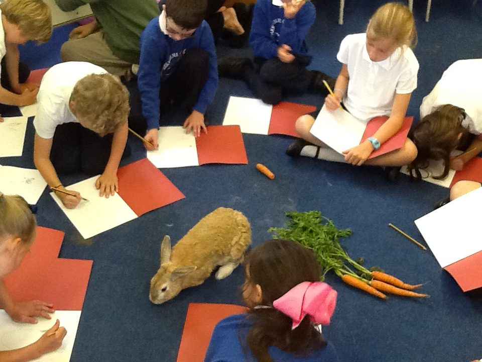Peter Rabbit - Arkholme Church of England Primary School
