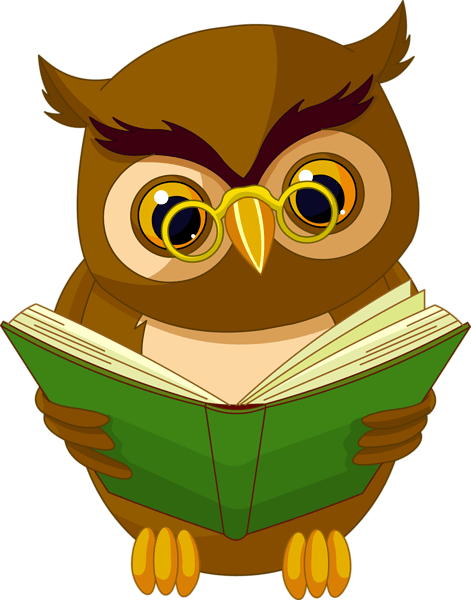 Owls News Update Summer 2019